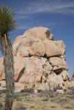 la roche s'élevante de noeuds ropes deux Photographie stock libre de droits