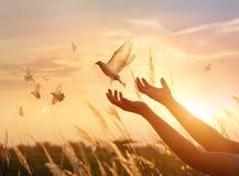 La rogación de la mujer y el pájaro libre disfrutan de la naturaleza en fondo de la puesta del sol imagenes de archivo