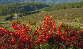 La Rolling Hills verde del paese di vino italiano Immagini Stock