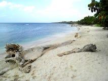 La Romana Caribbean beach dominican republic Royalty Free Stock Photography