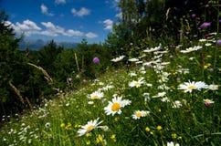 La Romania, bello paesaggio Fotografia Stock Libera da Diritti