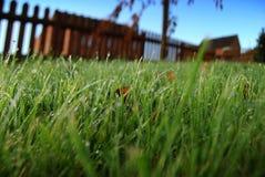 La rosée a couvert la pelouse photo stock
