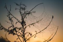 La rosée en toile d'araignée sur une brindille Images libres de droits