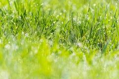 La rosée humide d'herbe a brouillé le bokeh de lumière du soleil de pré de fond photos stock