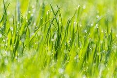 La rosée humide d'herbe a brouillé le bokeh de lumière du soleil de pré de fond photos libres de droits