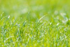 La rosée humide d'herbe a brouillé le bokeh de lumière du soleil de pré de fond image stock