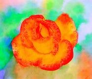 La rosa anaranjada Imágenes de archivo libres de regalías