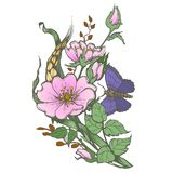 La rosa canina selvatica fiorisce con il clipart di vettore del disegno della farfalla su fondo bianco illustrazione vettoriale
