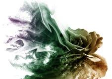 La rosa dal fumo immagini stock