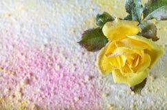 La rosa del amarillo asperjó el polvo en un fondo abstracto llenado del polvo coloreado Fondo floral abstracto hermoso Fotos de archivo libres de regalías