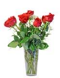 La rosa del rojo florece en un florero transparente, hojas del verde, cierre para arriba, el fondo blanco, aislado Fotografía de archivo libre de regalías