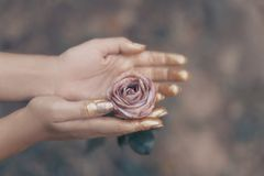 La rosa di rosa in mani del ` s delle donne con oro sui petali si chiude su Immagine Stock