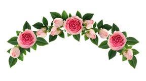 La rosa di rosa fiorisce e germoglia la disposizione dell'arco Fotografia Stock