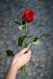 La rosa roja en la mano del hombre para todo el mundo Foto de archivo