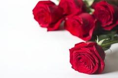 La rosa roja es un blanco Imagenes de archivo