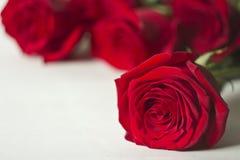 La rosa roja es un blanco Imágenes de archivo libres de regalías