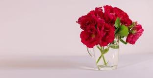 La rosa roja es un fondo blanco Foto de archivo libre de regalías