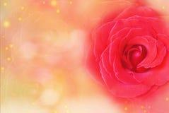 la rosa rossa su un arancio e su un rosso morbidi ha offuscato il fondo del bokeh per Valentine& x27; giorno di s Fotografia Stock Libera da Diritti