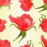 La rosa senza cuciture e le foglie di rosa di struttura d'annata su un fondo bianco vector l'illustrazione editabile Immagine Stock