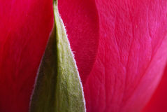 La Rose Imagen de archivo