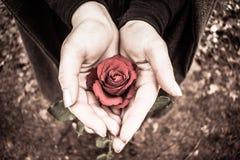 La Rose Foto de archivo libre de regalías