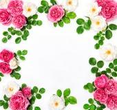 La rose blanche de rose fleurit le fond floral de cadre de configuration d'appartement Images stock