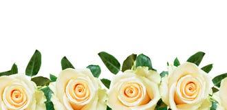 La rose de blanc fleurit la frontière Photographie stock