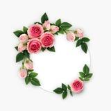 La rose de rose fleurit et bourgeonne la disposition sur la carte blanche de cercle Photo libre de droits