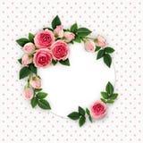 La rose de rose fleurit et bourgeonne la disposition sur la carte blanche de cercle Photographie stock libre de droits