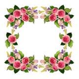 La rose de rose fleurit et bourgeonne le cadre illustration stock