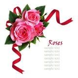 La rose de rose fleurit la composition et un ruban Photographie stock