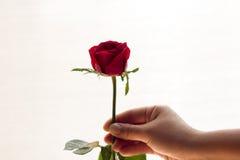 La rose de rouge a isolé le blanc, pendant les jours sombres de l'amour, l'espace de copie Photo libre de droits