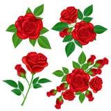 La rose de rouge a placé avec la feuille verte, d'isolement sur le blanc Images libres de droits