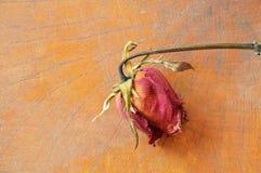 La rose de rouge se défraîchissent sur le fond en bois Photographie stock libre de droits