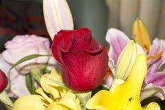 La rose rouge dans un bouquet des fleurs Photos libres de droits