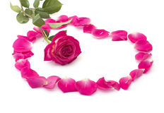 La rose rouge entourée avec des pétales des roses, une vie immobile Photos stock