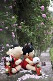 La roseraie pour l'amour Photos stock