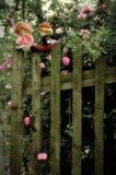 La roseraie pour l'amour Photographie stock libre de droits