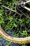 La rotella della bicicletta Fotografie Stock Libere da Diritti
