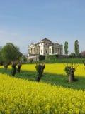 La Rotonda da casa de campo de Palladio com um campo amarelo da colza em Vicenza, Itália Imagens de Stock Royalty Free