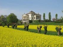 La Rotonda da casa de campo de Palladio na mola com um campo da colza Fotografia de Stock Royalty Free