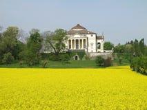 La Rotonda da casa de campo de Palladio na mola com um campo da colza Foto de Stock Royalty Free