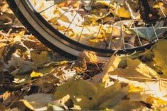 La roue de bicyclette se tient sur les feuilles tombées des arbres images libres de droits