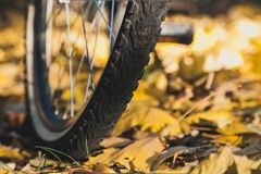 La roue de bicyclette se tient sur les feuilles tombées des arbres photo libre de droits
