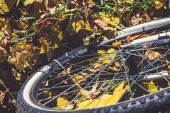 La roue de bicyclette se tient sur les feuilles tombées des arbres Photos libres de droits