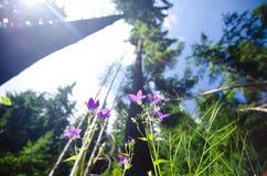 La Roumanie, pré de forêt Images stock