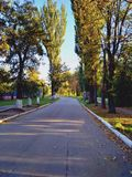 La route au beau milieu des arbres d'automne Route d'automne dans les rayons du coucher du soleil Voyage Horizons neufs image stock