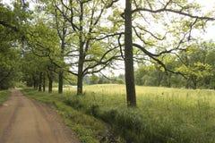 La route avec des arbres. Image libre de droits
