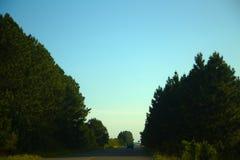 La route borded en tresse de pin et une voiture de collecte Image stock