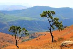 La route, chemin en montagnes de dragon de Drakensberg aménagent en parc Photographie stock